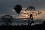 Sunset-on-Pantanal-wetlands