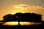 Sunrise-in-the-mist-of-Pantanal-wetlands