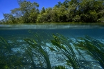 Crystalline-waters-of-Rio-da-Prata-Bonito