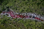Aerial-view-of-Cano-Cristales-in-Colombia