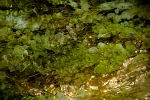Green-leaves-of-the-aquatic-plant-in-Cano-cristales