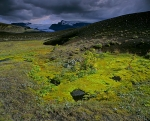 Mosses-and-tundra-of-Iceland