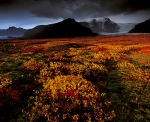 Tundra-during-fall-season-Iceland