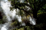 Hot-vapor-into-the-trees-of-Geysers-Valley-in-Kamchatka