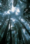 Eungella-Temperate-rainforest-Australia