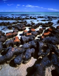 Stromatolites-de-Shark-bay-Australie-Occidentale
