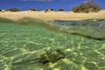 Common-stingray-Ningaloo-Western-Australia